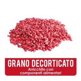 Esca in grano decorticato
